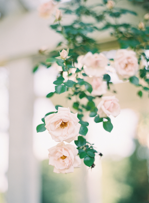 light-pink-wedding-garden-roses