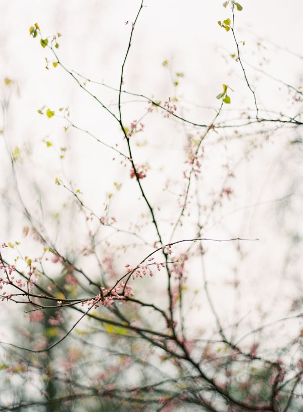 pink-spring-buds-blossoms-branches-march