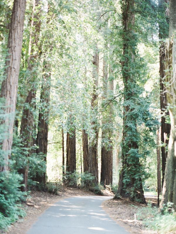 redwoods-drive-road-big-sur-forest