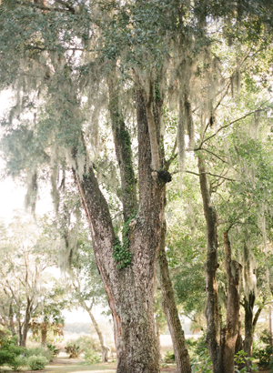 charleston-southern-moss-wedding-ideas