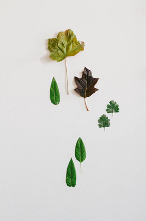 green-leaves-wedding-ideas