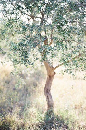 olive-branch-wedding-inspiration