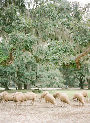 sheep-wedding-ideas