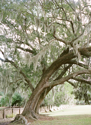 spanish-moss-wedding-tree