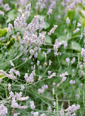 austin-gros-california-wedding-lavender21