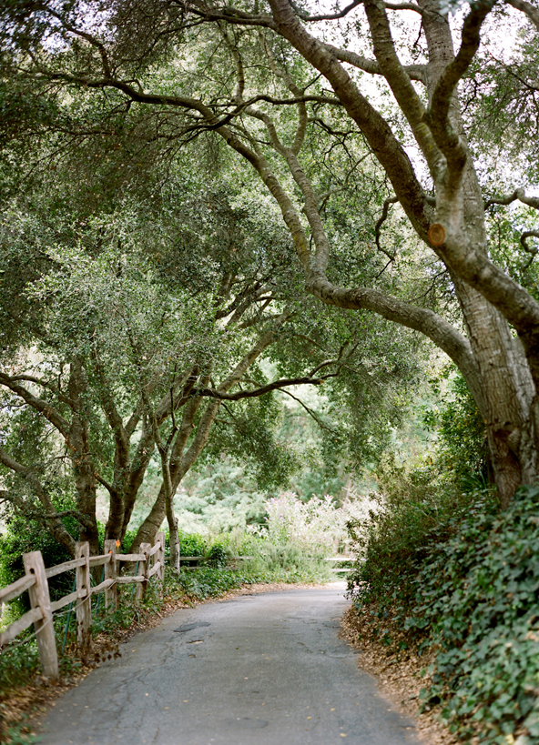 austin-gros-california-wedding-trees7