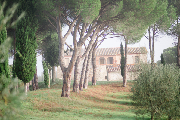 kate-holstein-trees-villa
