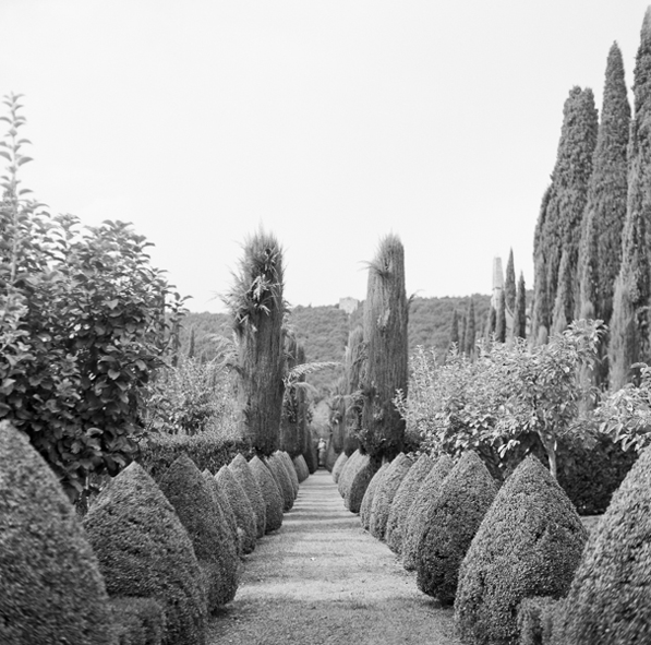 heather-wedding-trees-italy-italian-wedding-ideas