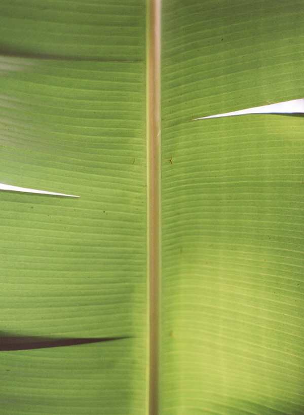 banana-leaf-jamaica