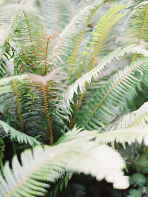 forest-ferns