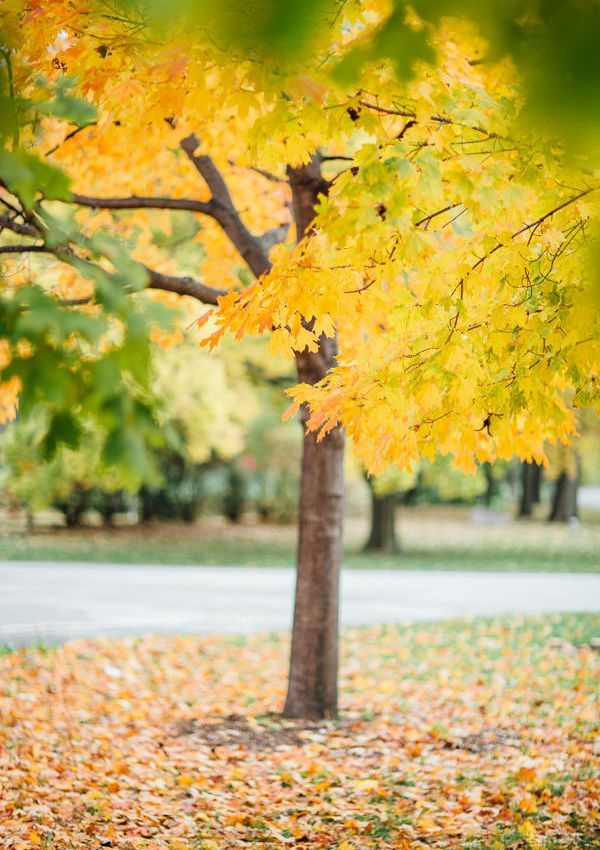 6-yellow-leaves-fall