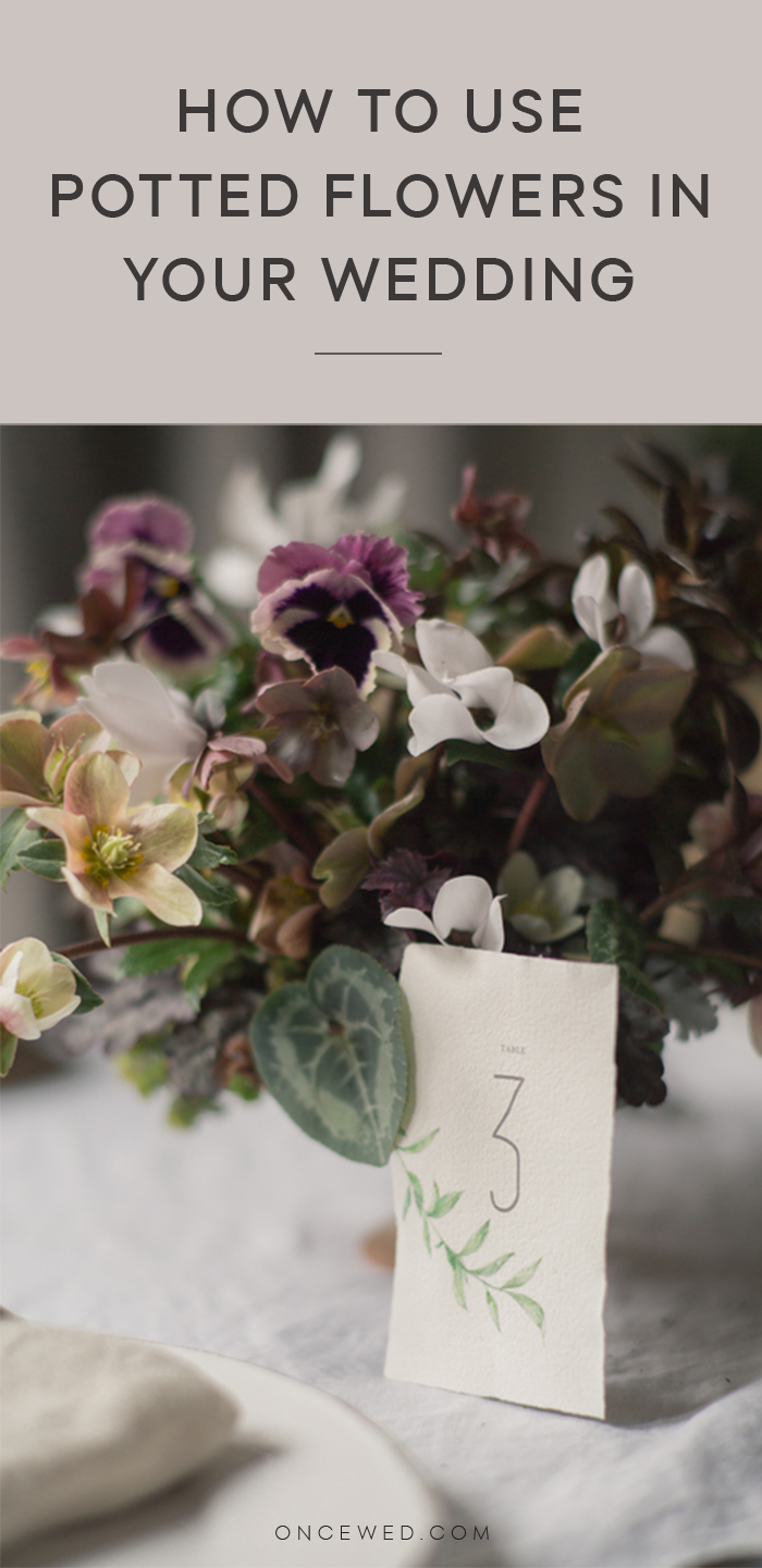 how-to-use-potted-flowers-in-your-wedding
