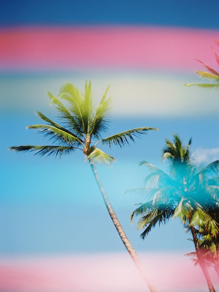 14-rainbow-palm-trees-wendy-laurel-photography
