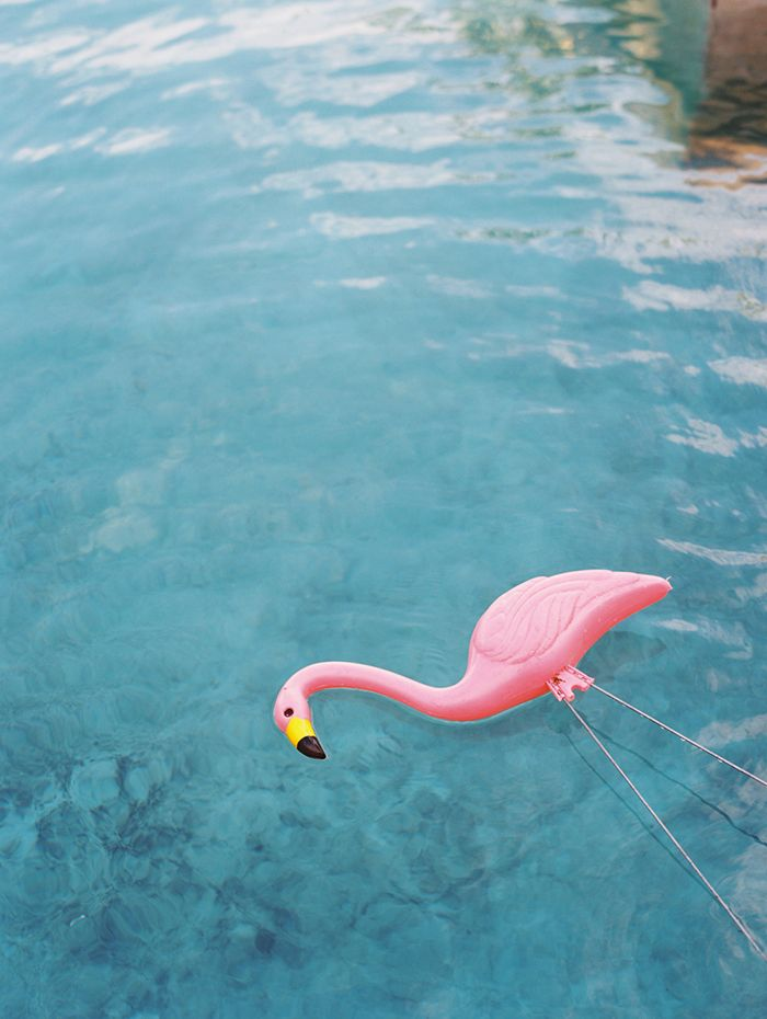 6-summer-photography-pink-flamingo
