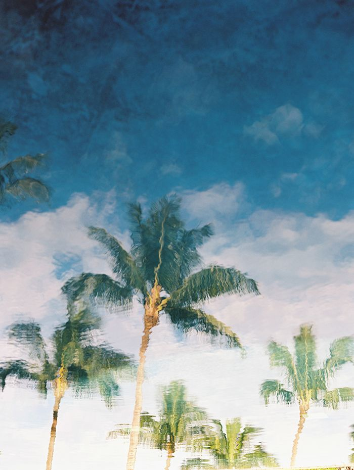 8-watercolor-palm-trees
