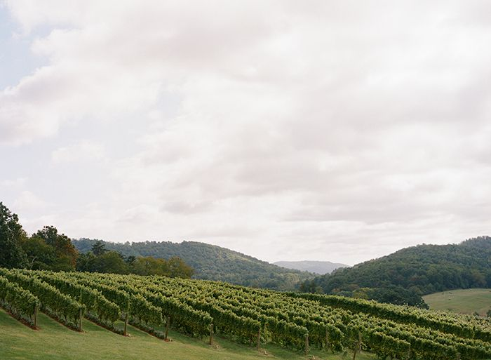 13-pippin-hill-vineyard-wedding