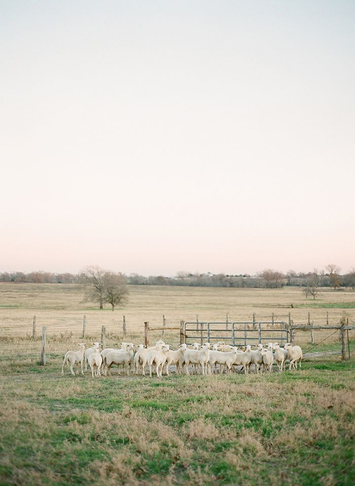 18-texas-farm-wedding-jose-villa