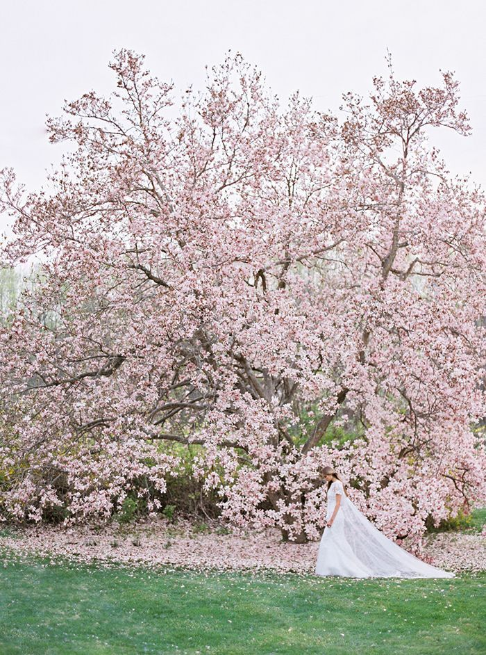 1-soft-pink-spring-bridal-portraits