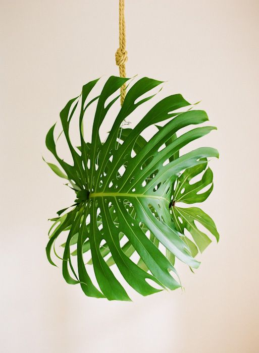 Wiring two giant monstera leaves around a frame creates not just a fun pendant light cover, but also a great focal point in your wedding décor. We love how simple the idea is, but the impact is huge. Make your own DIY tropical leaf pendant light using a hanging light or a battery-powered LED light . We can imagine a whole ceiling of various tropical foliage lights.