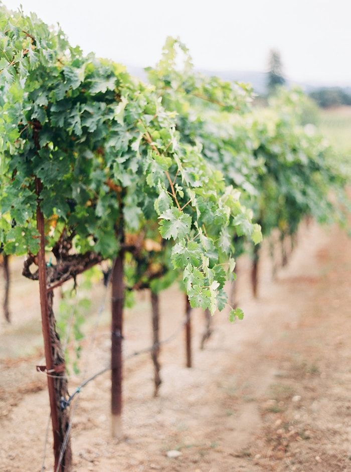 16-fall-vineyard-wedding
