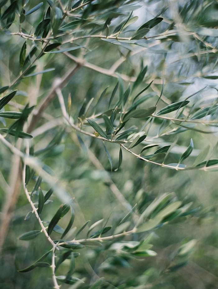 2-olive-wedding-greenery