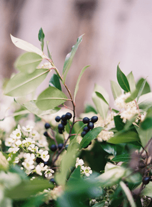 10-rustic-blueberry-bushes