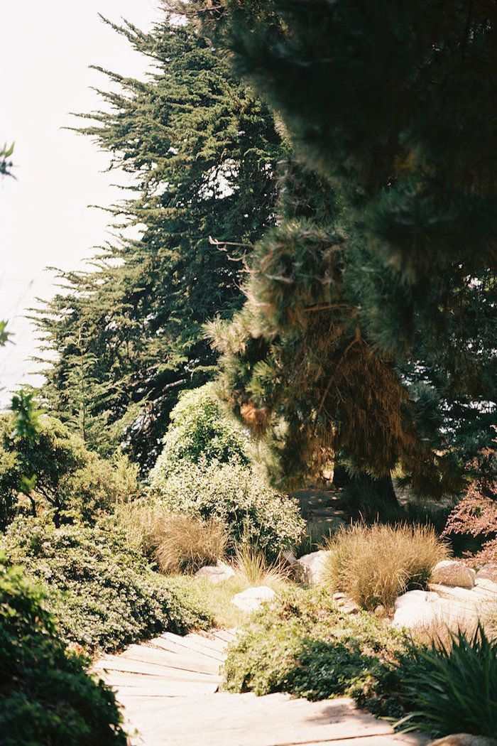 Big-Sur-Wedding |image 16 left