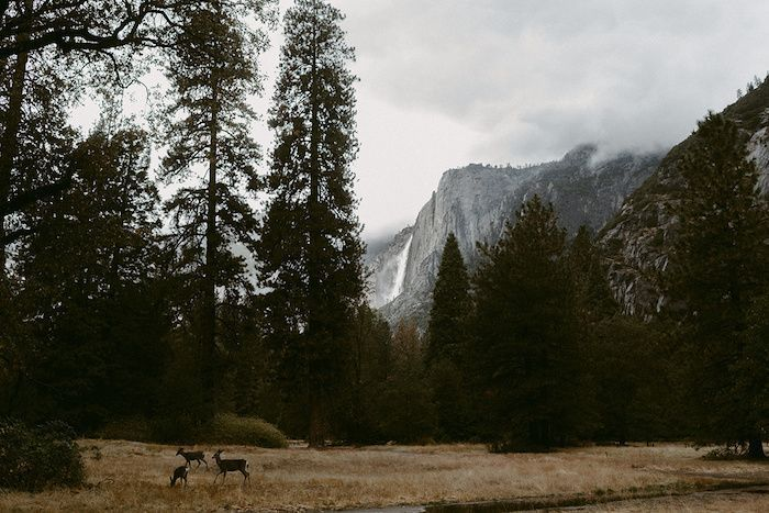 yosemite-wedding-4