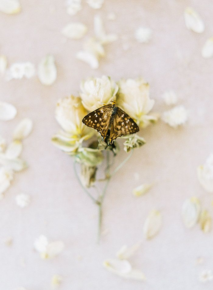 OTOGRAPHY_SHOPGOSSAMER_BUTTERFLY_LOSANGELESWEDDINGINSPIRATION-127