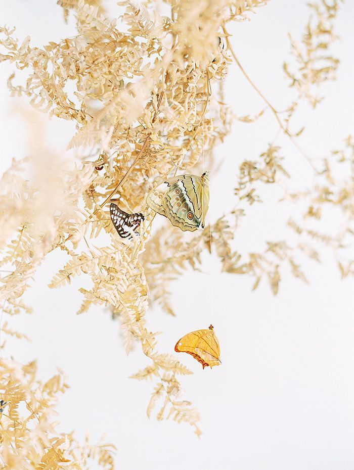 OTOGRAPHY_SHOPGOSSAMER_BUTTERFLY_LOSANGELESWEDDINGINSPIRATION-230